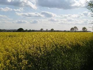 Bäuerliche Landschaft